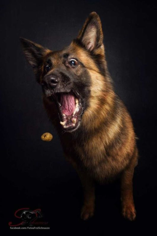 Superb Photos Of Hungry Dogs Trying To Catch Treats