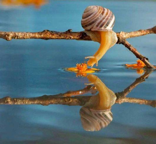 Stunning Macro Photography