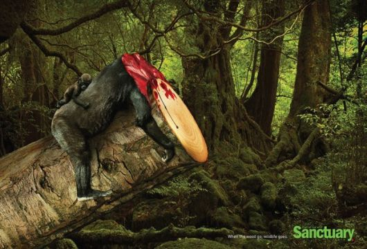 A Powerful Message About Deforestation