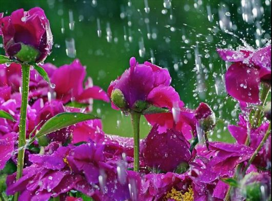 After The Rain, Flowers Come Alive