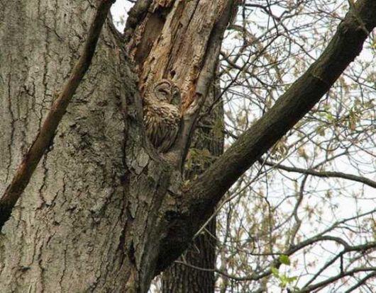 Stunning Photos Of Camouflaged Owls