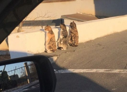 Crazy Cats Pretending To Be Human