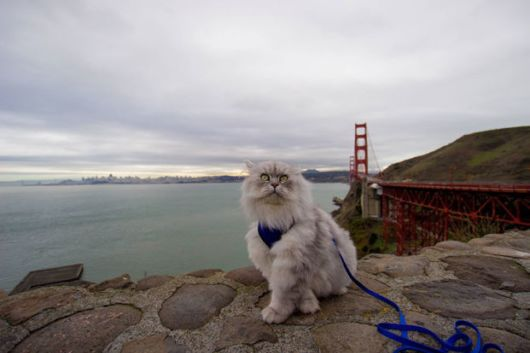 Gandalf - The Certified Adventure Travelling Cat